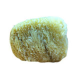 Natural Silk Sea Sponge